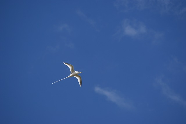 pixabay-paillequeue-bird-422927_640